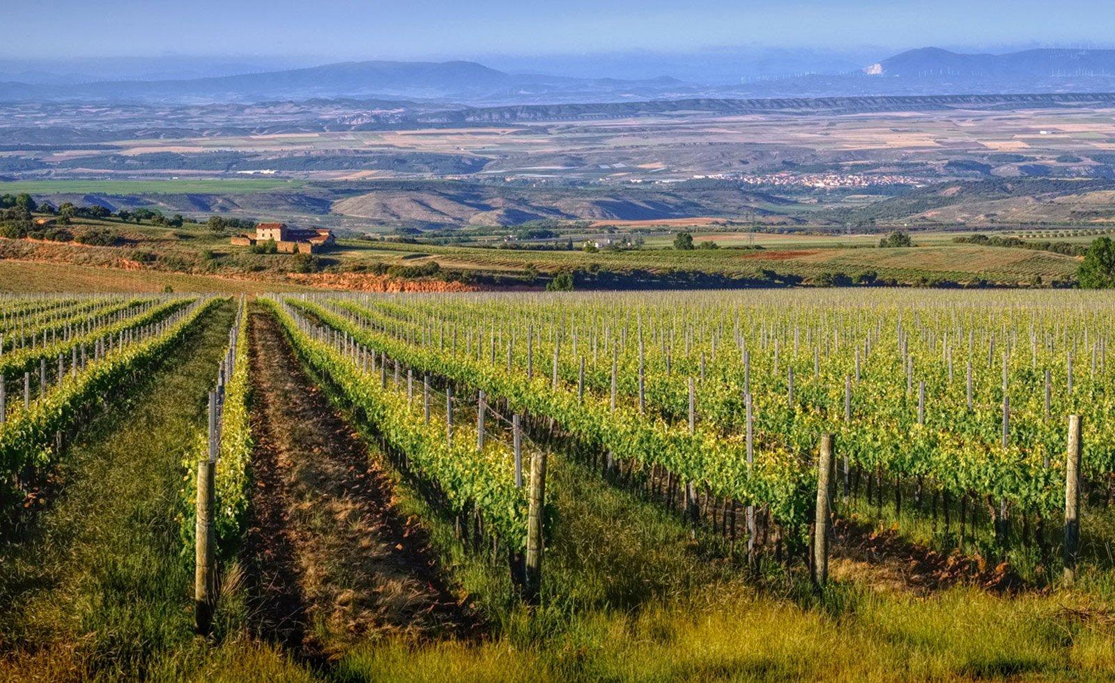 Vista paisaje de viñedos Finca Vistahermosa