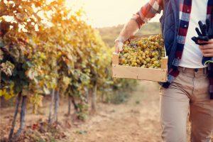 Experiencias de Enoturismo en La Rioja